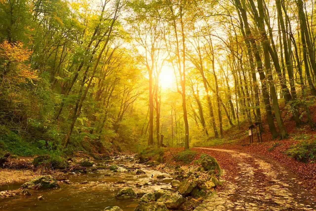 Bereketli Ülkemizde Her Çeşidi Var: Ülkemizde Yetişen Ağaç Türleri