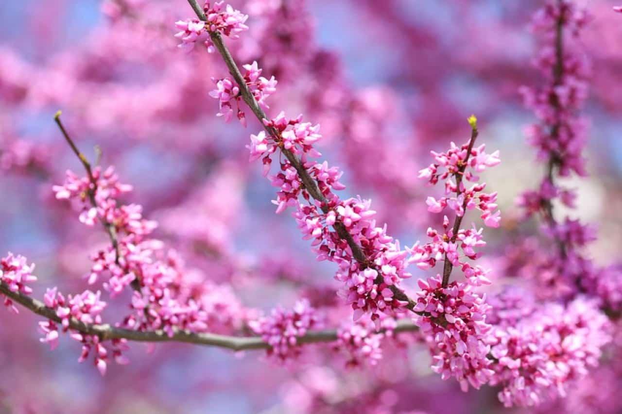 Doğa Uyanırken Görüntüsüyle Büyüleyen Bahar Çiçekleri