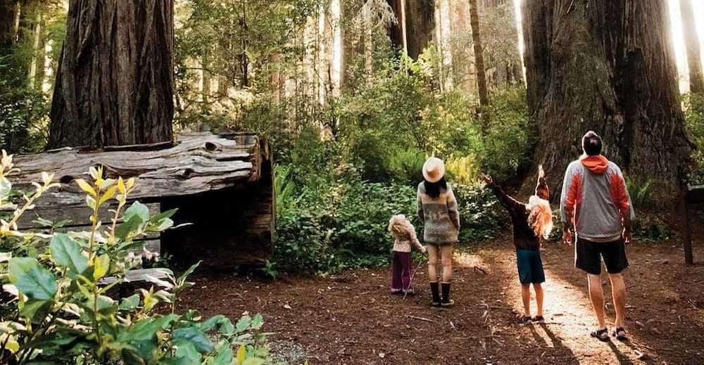 Dünyanın Nefesi Orman Nedir? Ormanın Ne Gibi Faydaları Vardır?