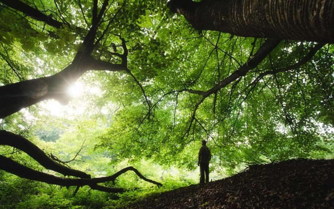 Felsefesi, Şaşırtıcı Bilgileri ve Her Yönü ile Doğa Nedir?