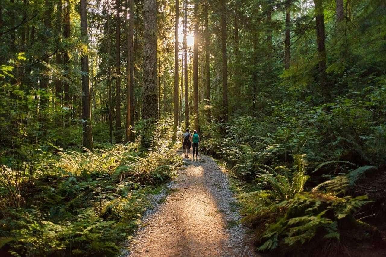 Güzelliği Karşısında Şaşkınlığınızı Gizleyemeyeceğiniz Dünyadan Orman Manzaraları