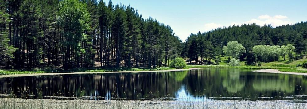 Soğuksu Mlli Parkı Fosil Ağaç