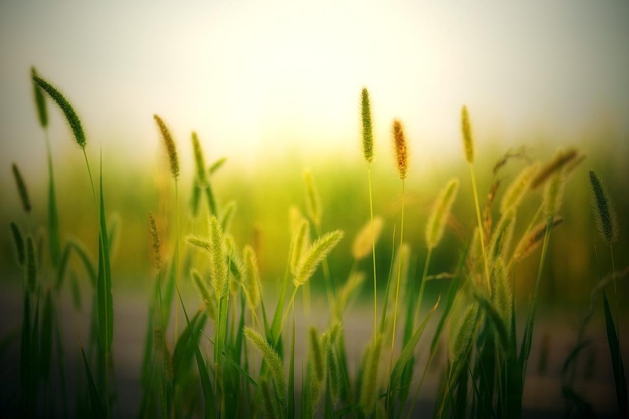 doğanın korunması, çeşitli yeşil bitkiler