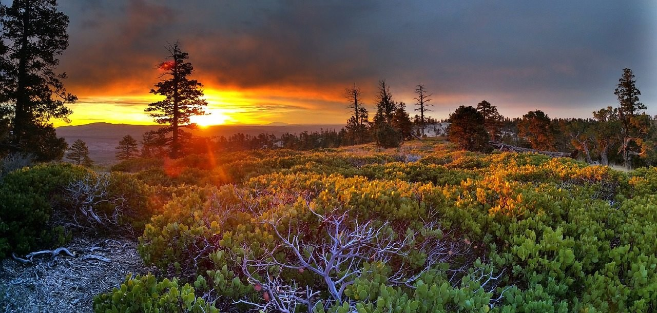 güneş doğarken çekilmiş bir orman resmi