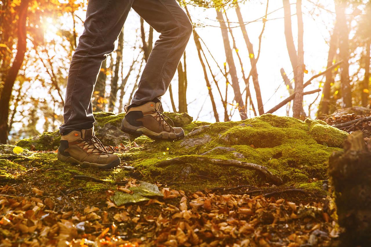 ormanda yürüyüş yapan kişi