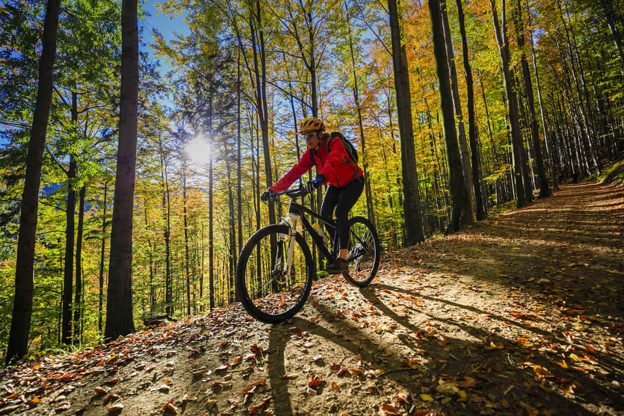ormanda bisiklete binen sporcu