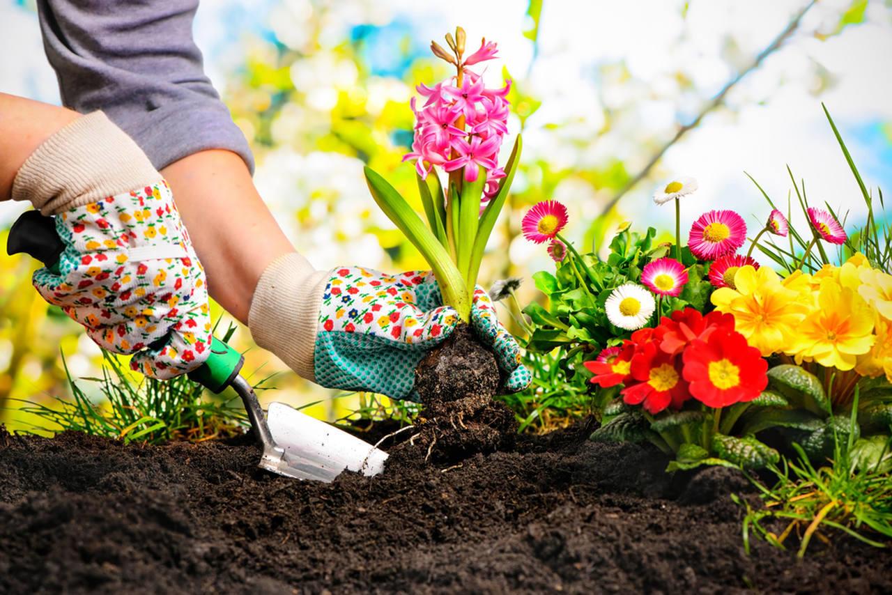 çeşitli renkli bitkilerin bakımını yapan kişi