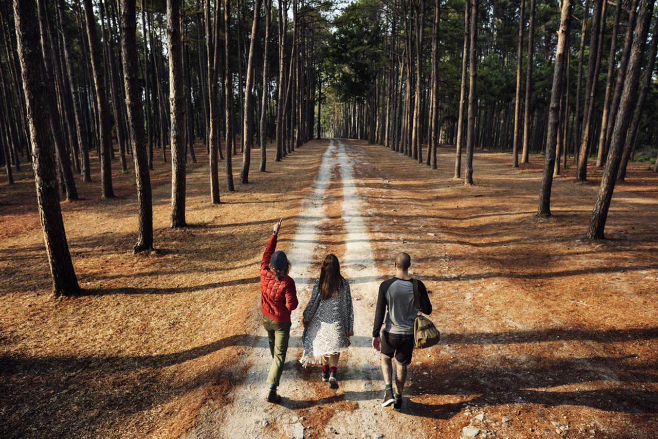 ormanda dolaşmaya çıkmış üç kişilik insan grubu