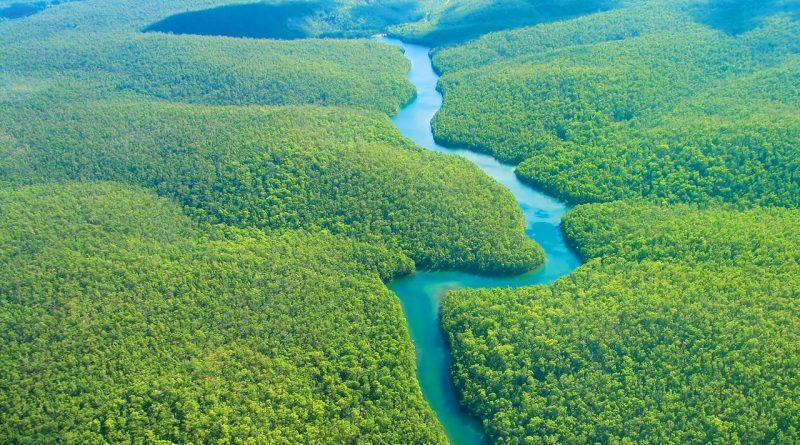 orman nedir, amazon ormanları, yağmur ormanları