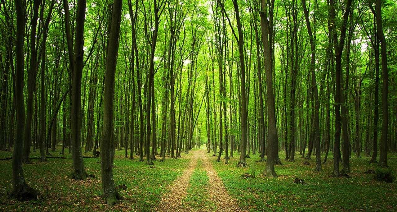 orman nedir