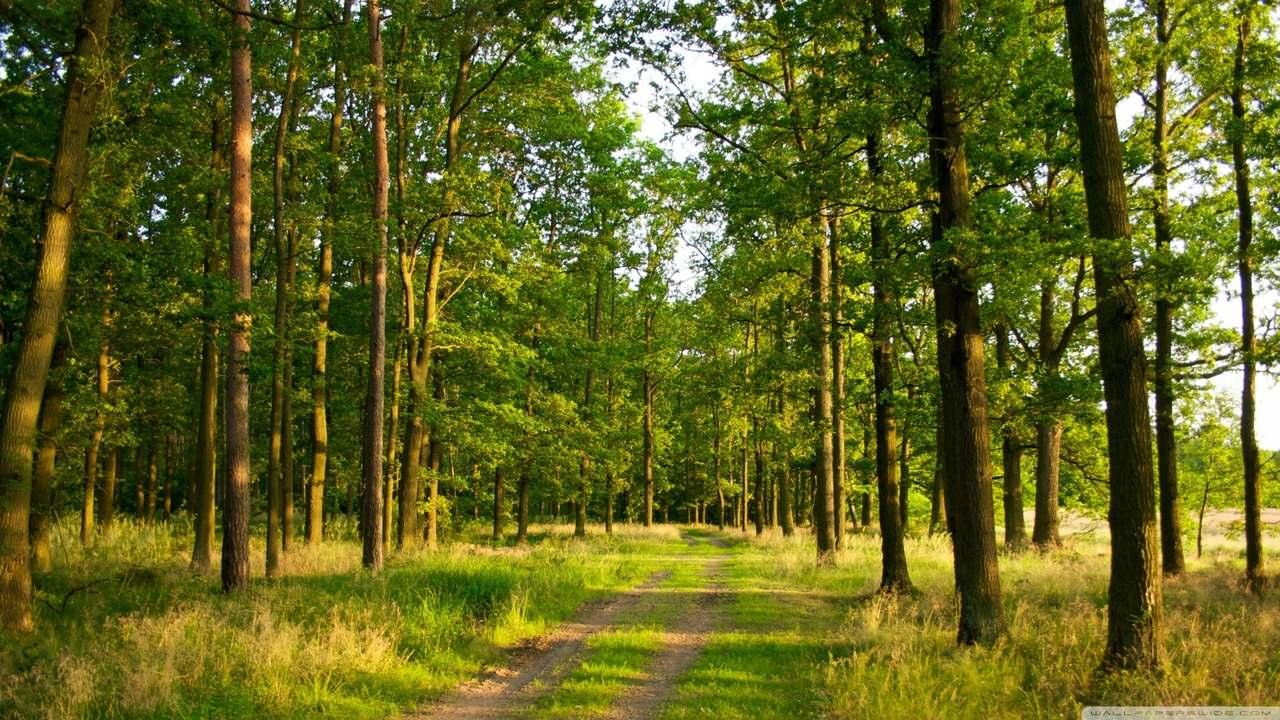 orman nedir, ormanın faydaları, ormanda kadın