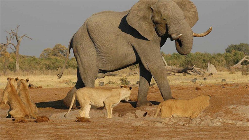 africa, afrika doğa belgeseli