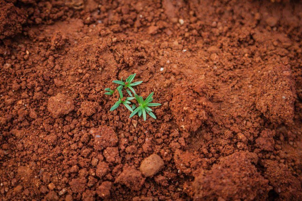 kızıl toprak, toprak çeşitleri, toprak türleri