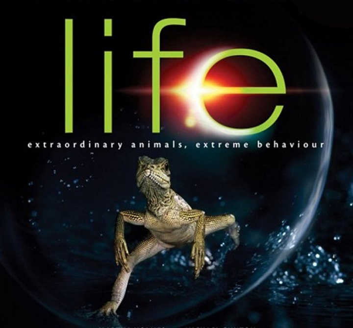 life, hayat doğa belgeseli