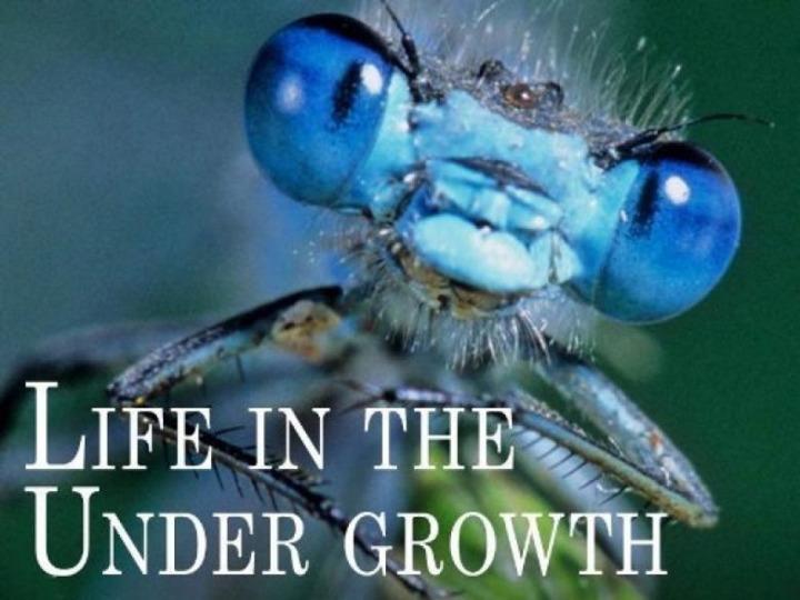 life in the undergrowth, orman altında yaşam doğa belgeseli