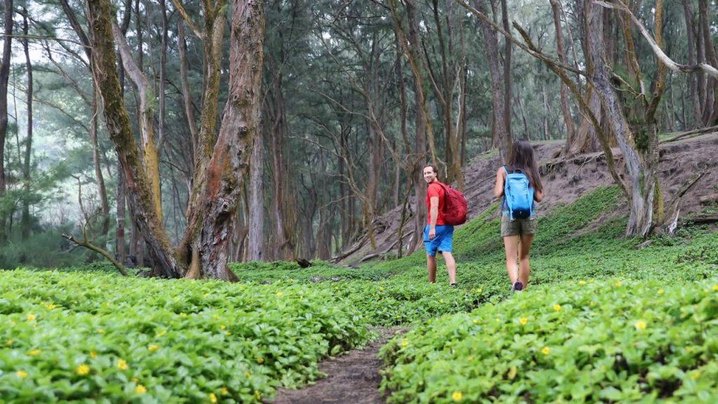 ormanda doğa yürüyüşü yapan çift